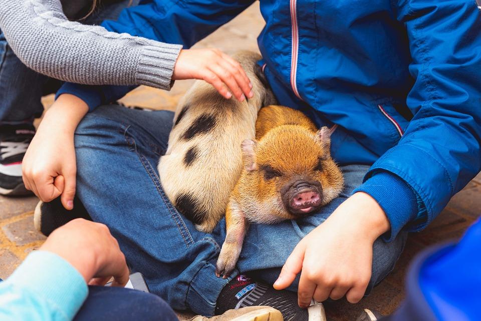 Zoo, Kids, Family, Pets, Bird, Farm, Cute, Furry, Pig