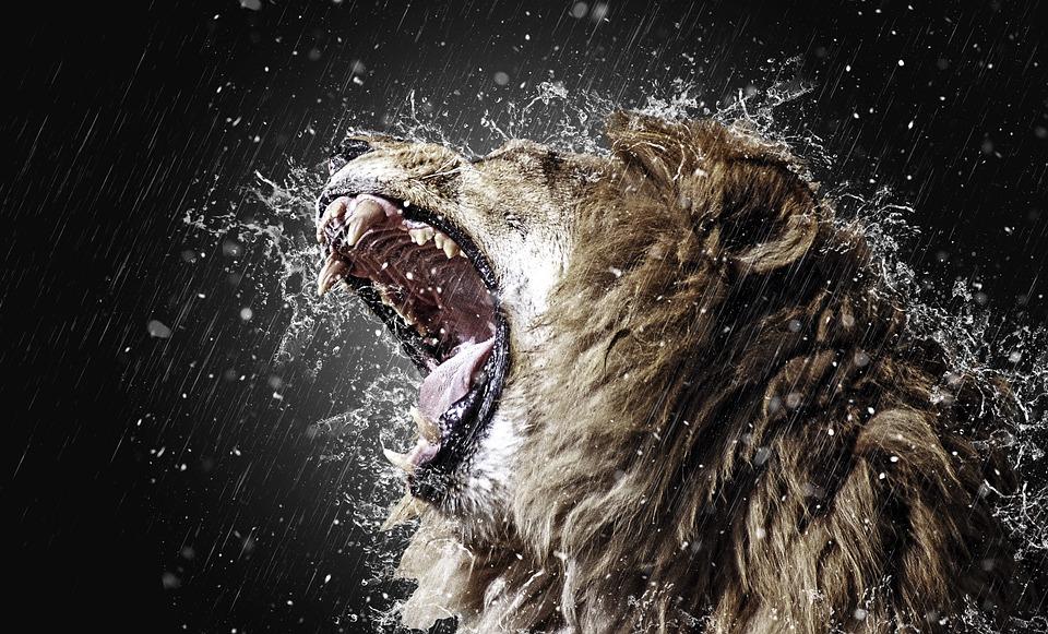 Lion, Roar, Tooth, Predator, Fangs, Big Cat