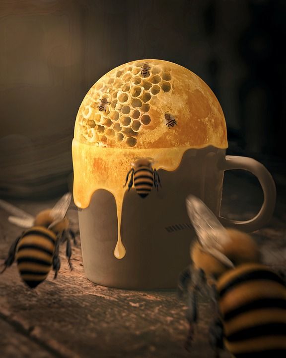 Bee, Honey, Fantasy, Surreal, Photo Manipulation