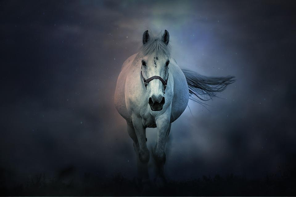 Fantasy, Horse, Animals, Mystic, Magic