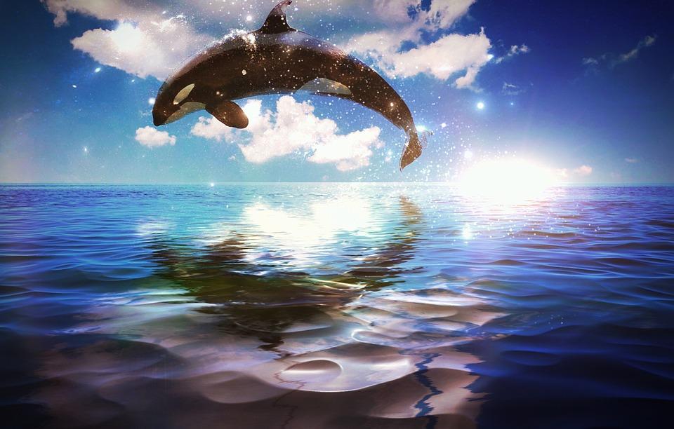 Whale, Ocean, Sunrise, Feeling, Beautiful, Fantasy