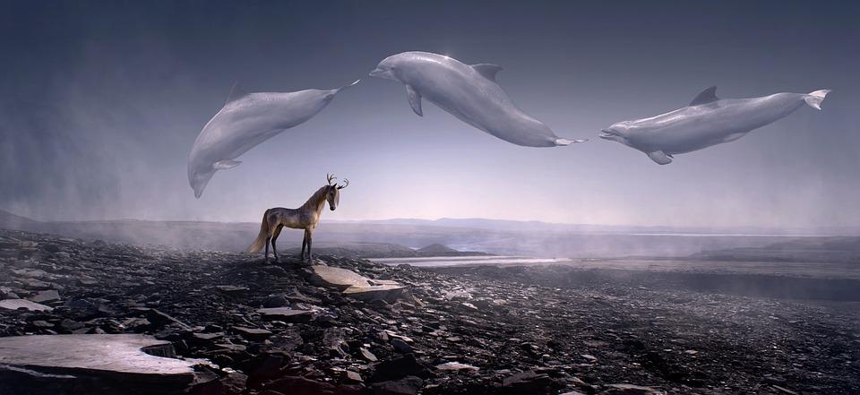 Fantasy, Dolphins, Stone Desert, Horse, Fly, Weightless