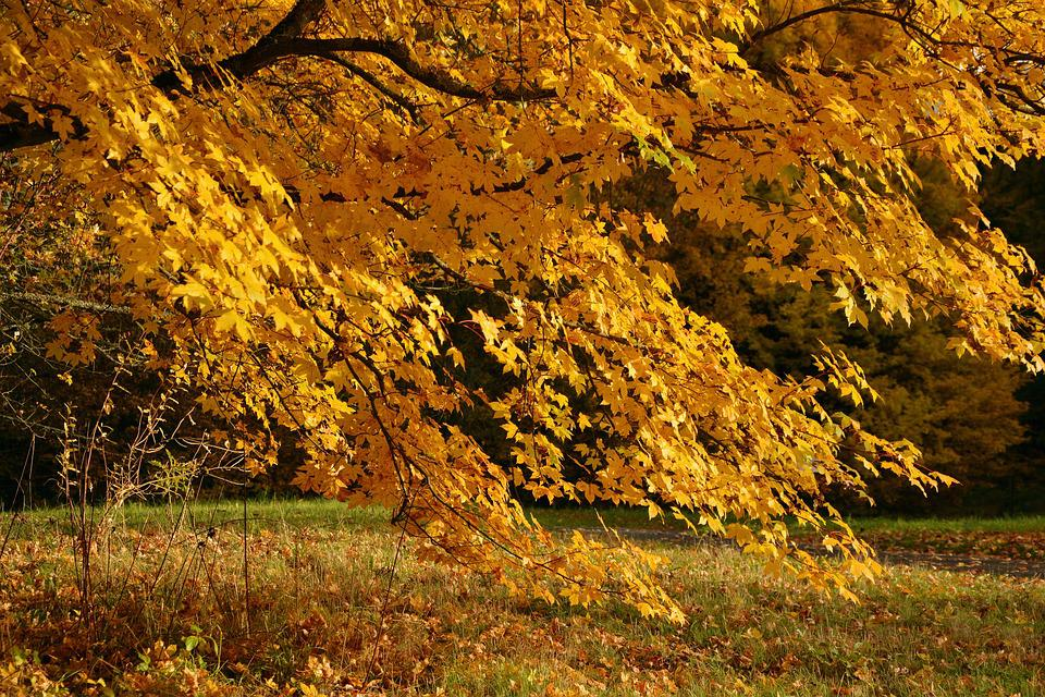 Autumn Tree, Emerge, Autumn, Farbenpracht, Fall Color