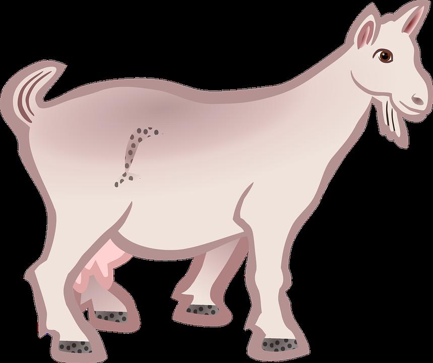 Goat, Animal, Farm Animal