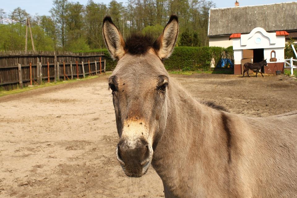 Farm, Animals, Rural District, Horse, Mammals