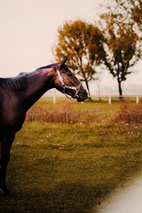 Horse, Nature, Horses, Pastures, Mare, Animals, Farm