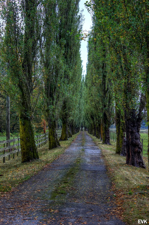 Trees, Road, Entryway, Countryside, Tall, Country, Farm