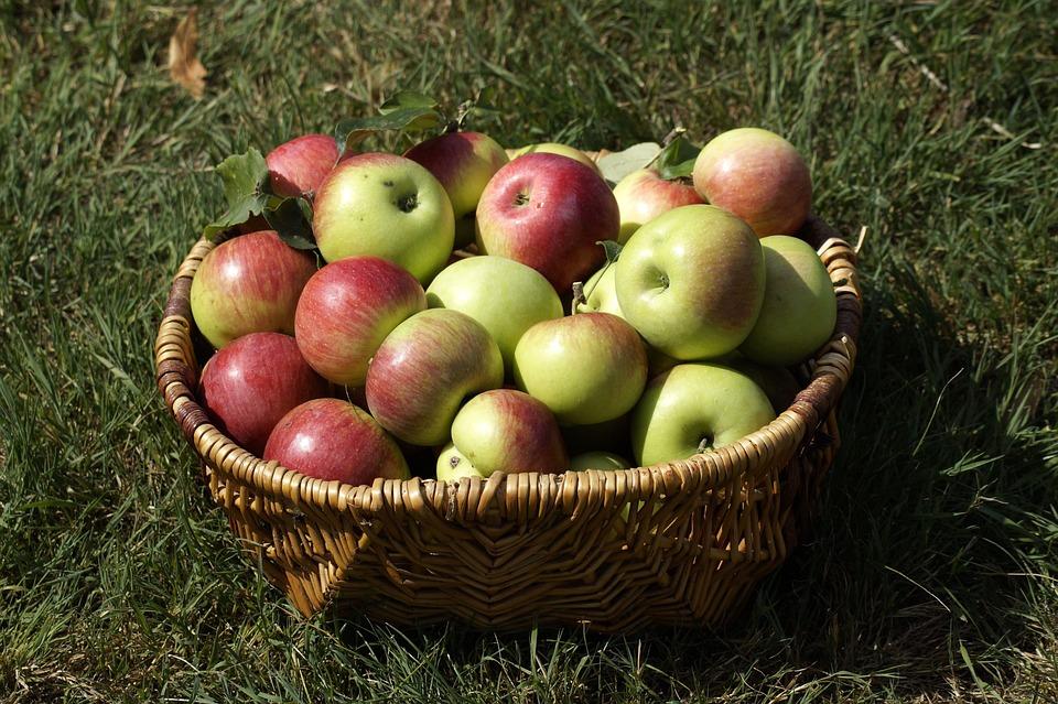 Apple, Basket, Garden, Fruit, Harvest, Nature, Farm