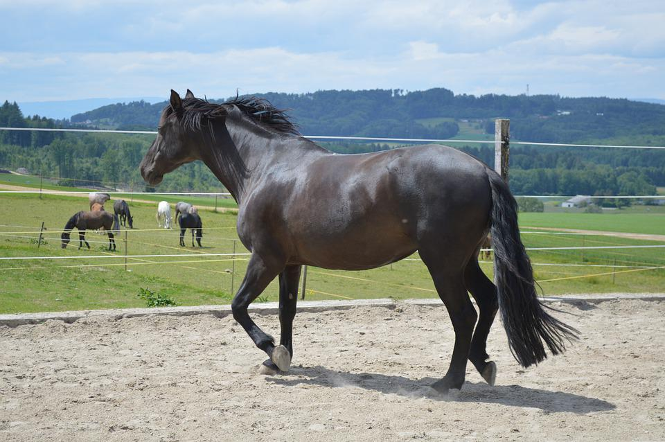 Mammal, Animal, Horse, Hayfield, Farm