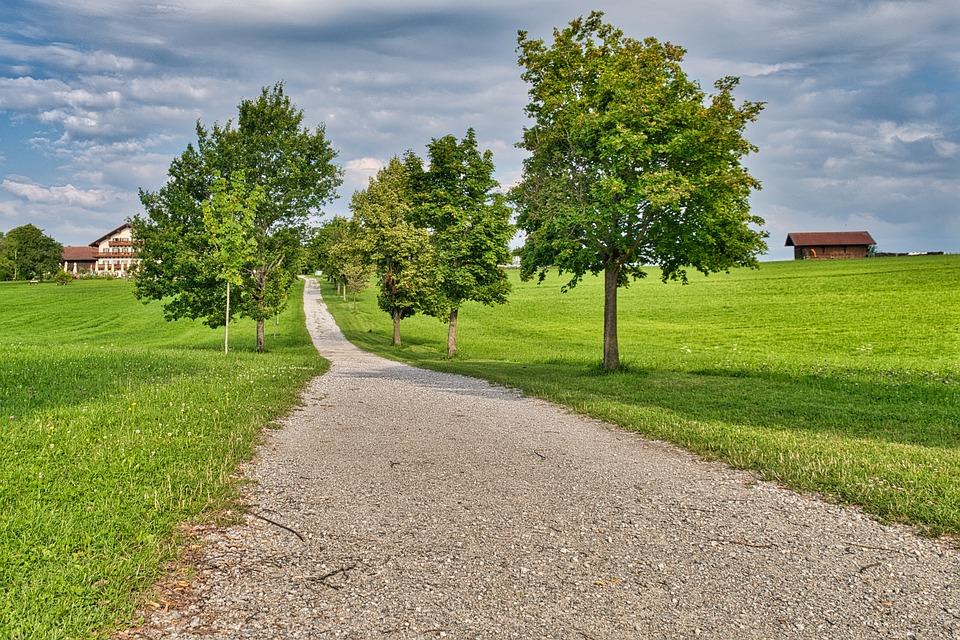 Pathway, Trail, Trees, Lane, Meadow, Farm, House