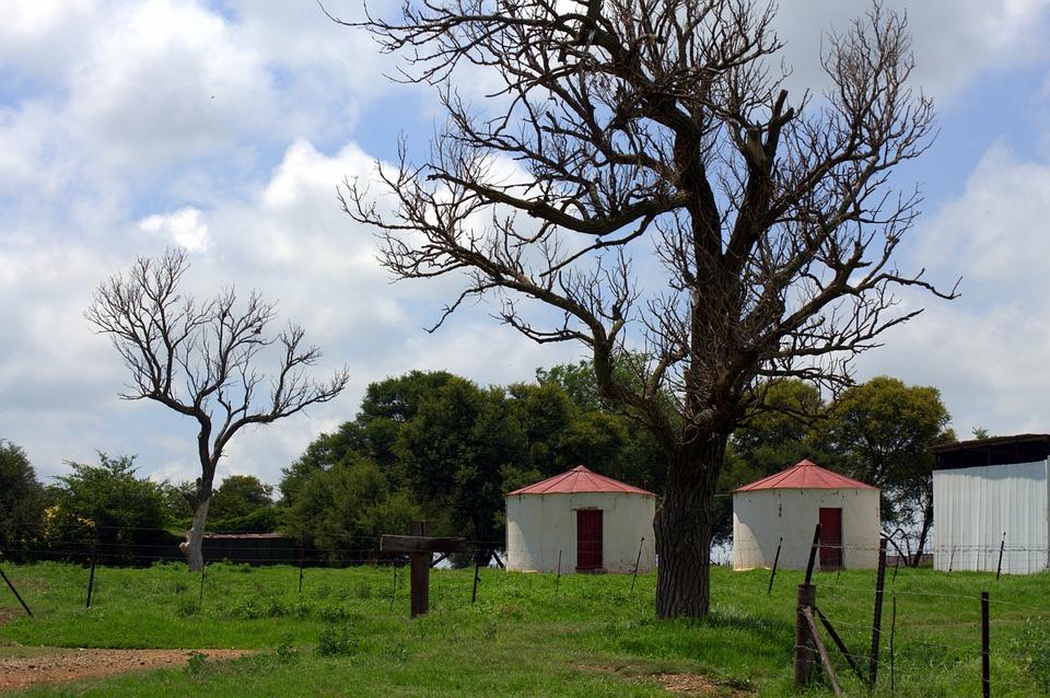 Farm Life, Countryside, Farming
