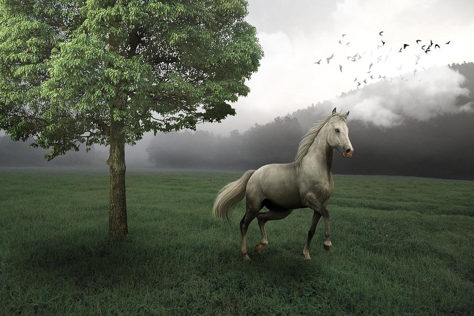 Mammals, Haymaking, Grass, Nature, Farm, Cavalry, Tree