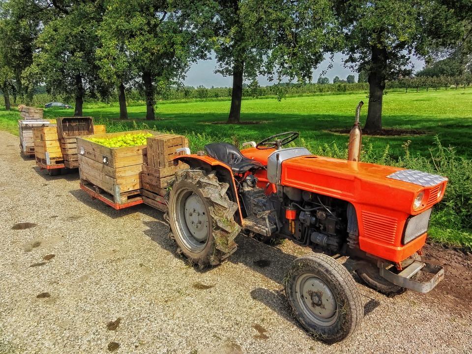 Netherlands, Fruit Harvest, Farm, Rural, Tractor