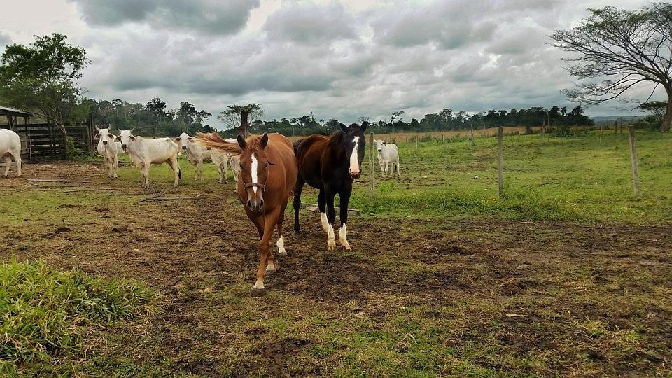 Horse, Quarter Horse, Cloudy, Hayfield, Farm, Grass
