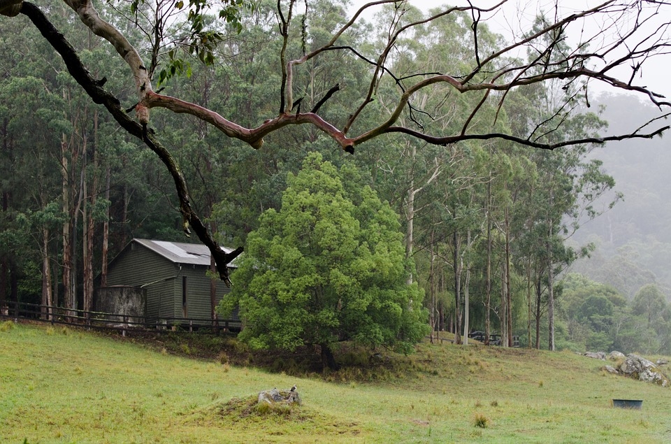 Shed, Branch, Trees, Farm, Grass, Mist, Wet