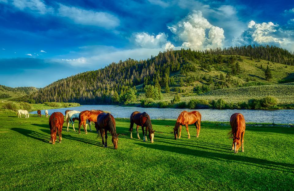 Horses, Grazing, Wyoming, Farm, Ranch, Hdr, America