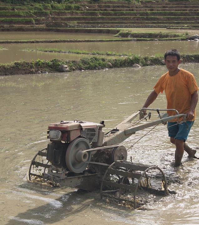 Farmer, Laos, Agriculture, Work, Farm