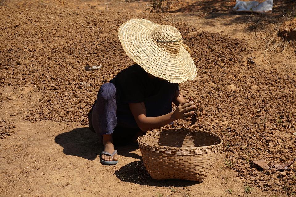 Myanmar, Burma, Hilltribe, Farmer, Rural, Landscape