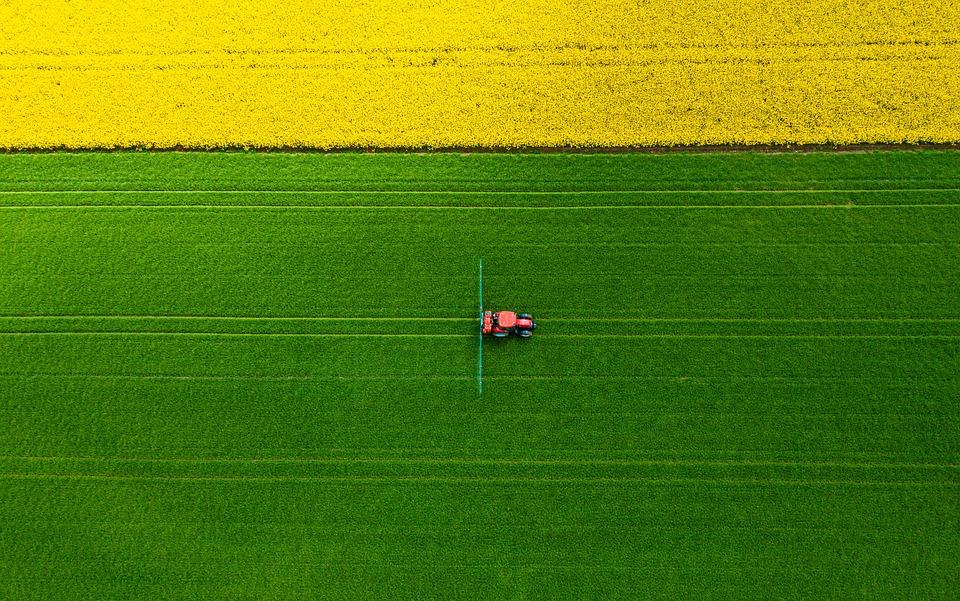 Oilseed Rape, Rapeseed, Field, Arable Land, Farming