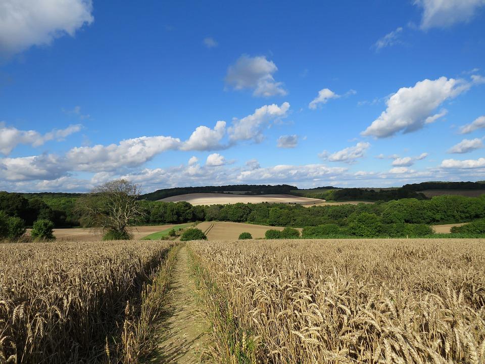 Countryside, Field, Wheat, Farmland, Crop, Farming