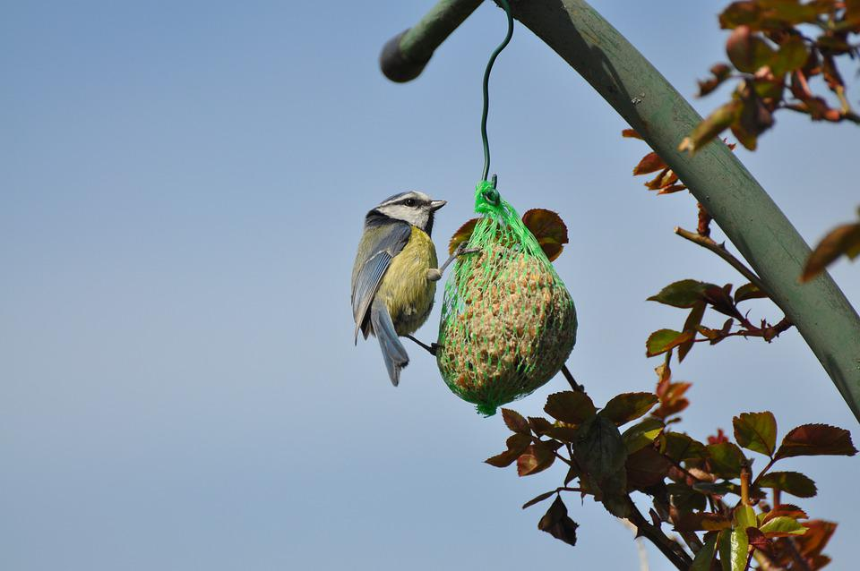 Blue Tit, Bird, Fat Ball, Bird Food, Tit, Animal