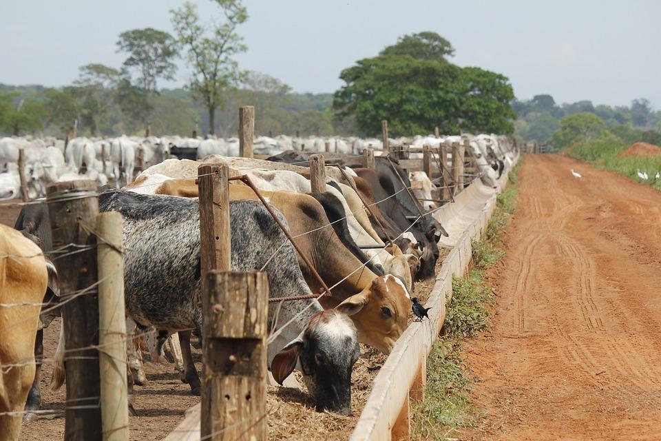Livestock, Diet, Power, Feeder, Fattening, Ranch, Meat