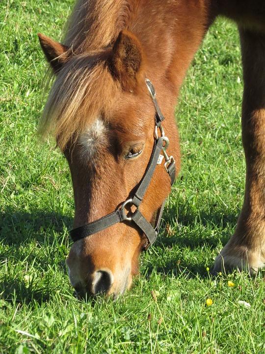 Horse, Animals, Nature, Fauna