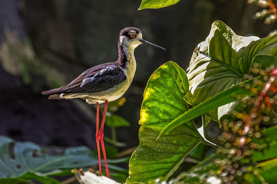 Nature, Outdoor, Bird, Fauna, Leaf, Color, Zoo, Fall