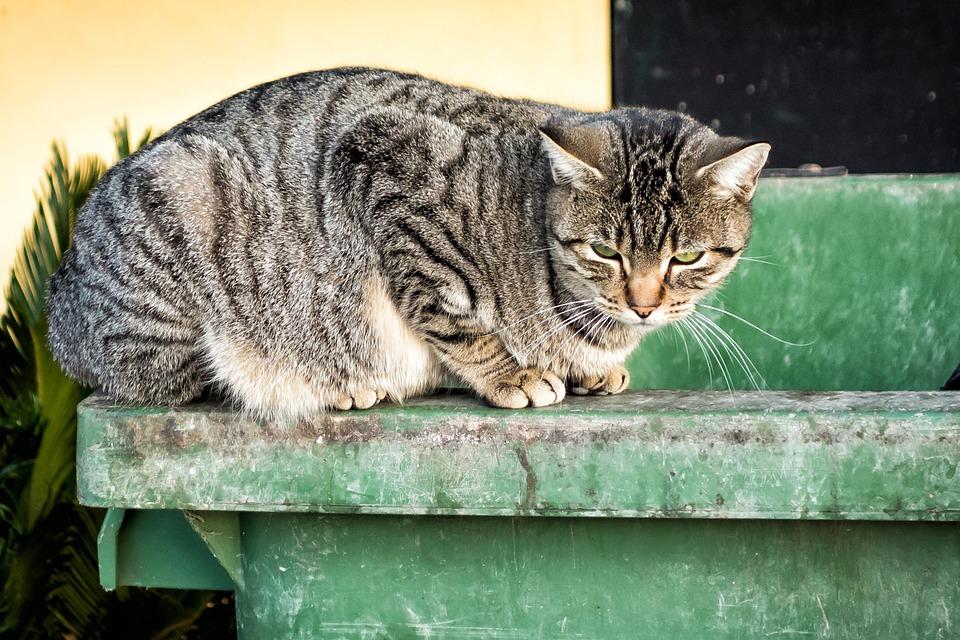 Cat, Animal, Pet, Feline, Gata, Green Eyes, Fauna