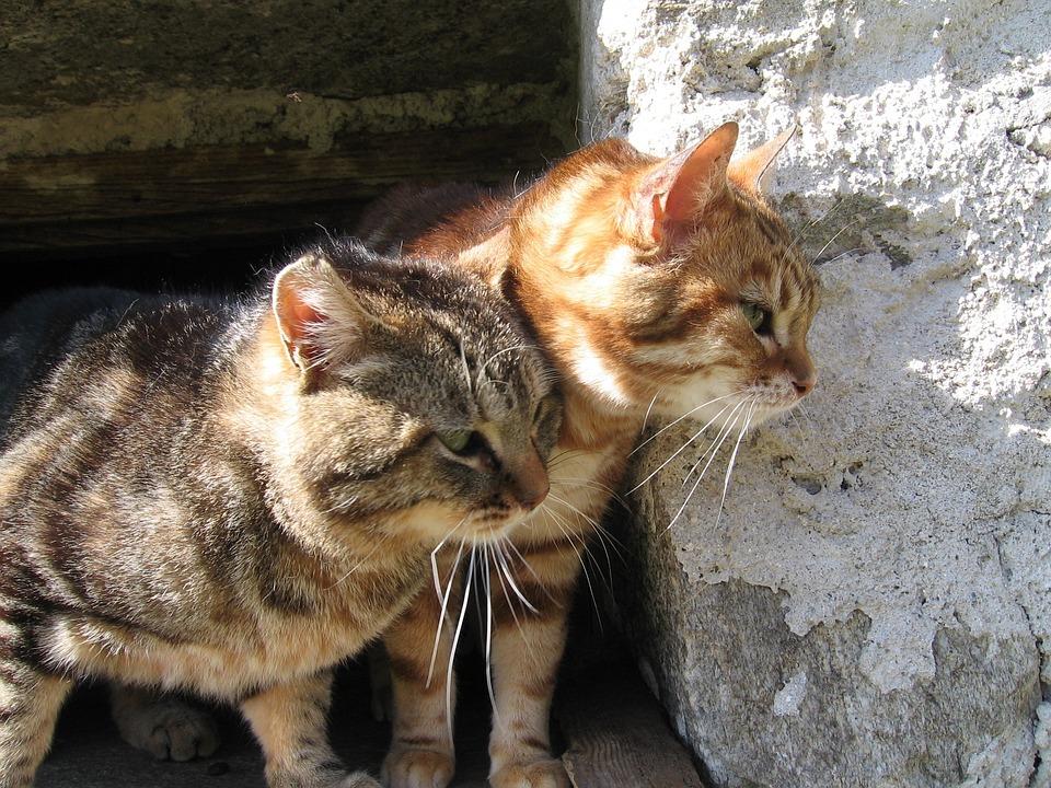 Kittens, Wild, Stone, Fauna