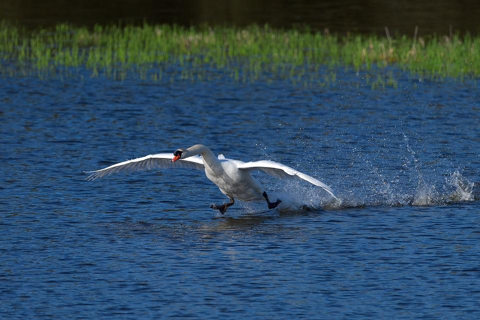 Body Of Water, Nature, Fauna, Bird
