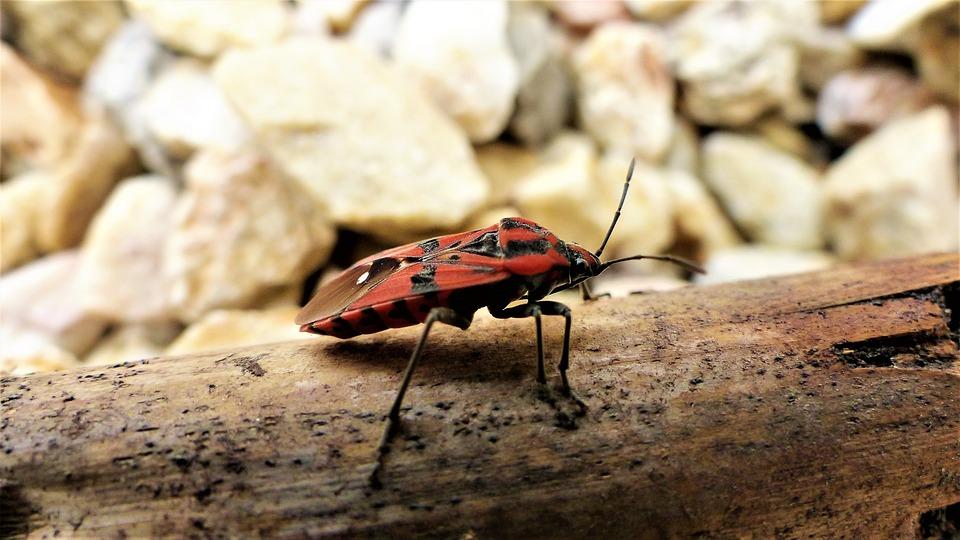 Nature, Insect, Fauna, Petit, Animal