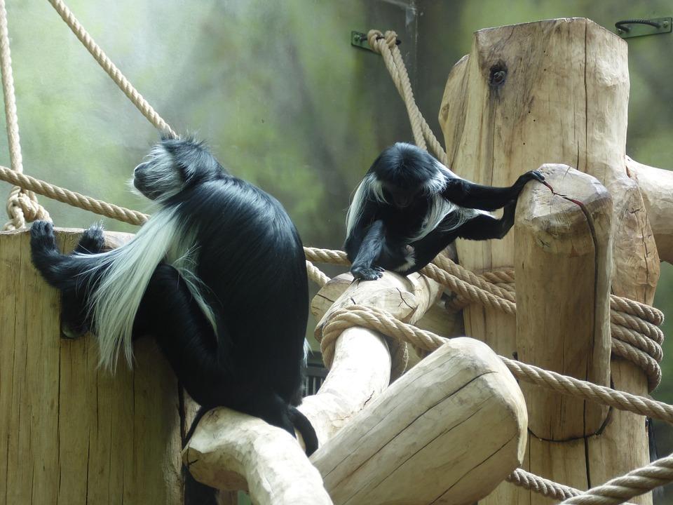 Animals, Monkeys, Zoo, Fauna, Nature, Mammal, Animal
