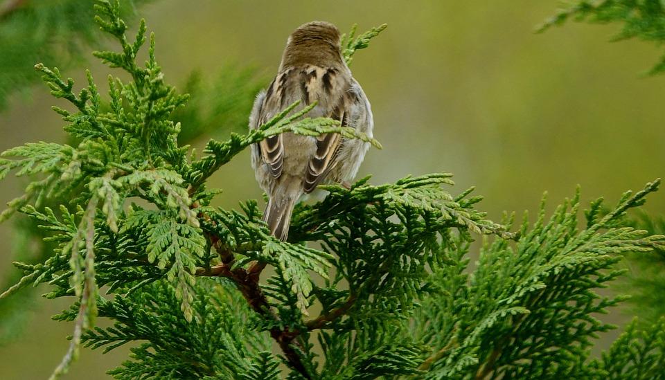 Nature, Tree, Fauna