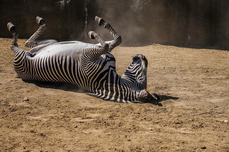 Fauna, Nature, Mammal, Wild, Animal, Zoo