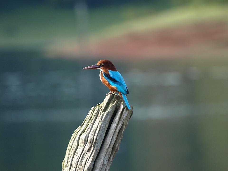 Bird, Nature, Fauna, No Person, Open-air Martin-fisher