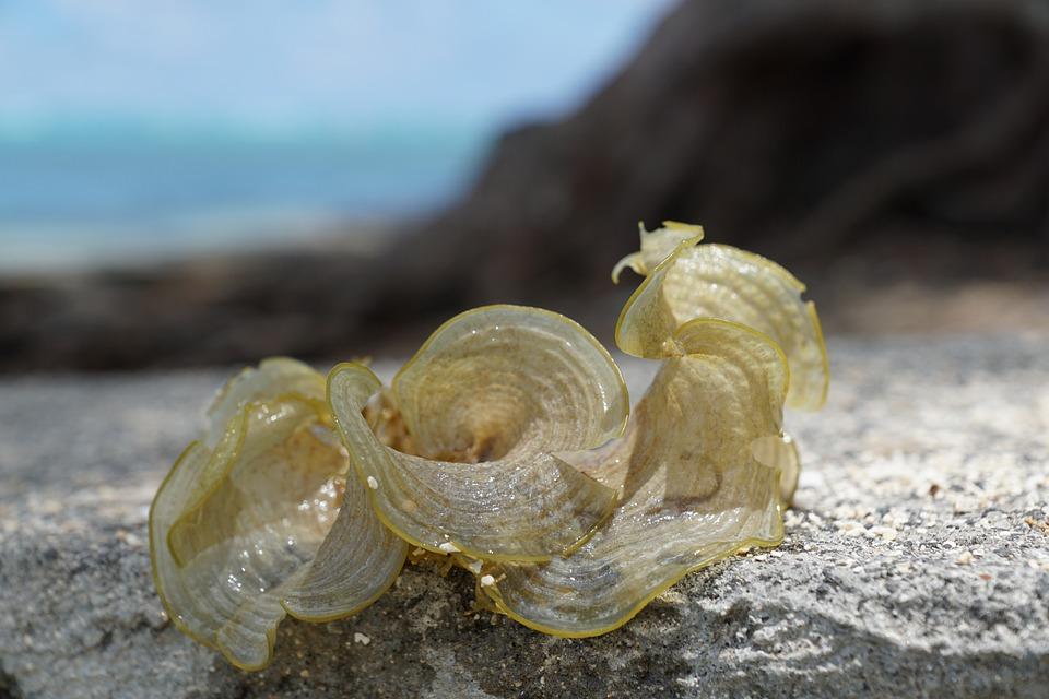 Seaweed, Sea, Water, Green, Nature, Ocean, Fauna