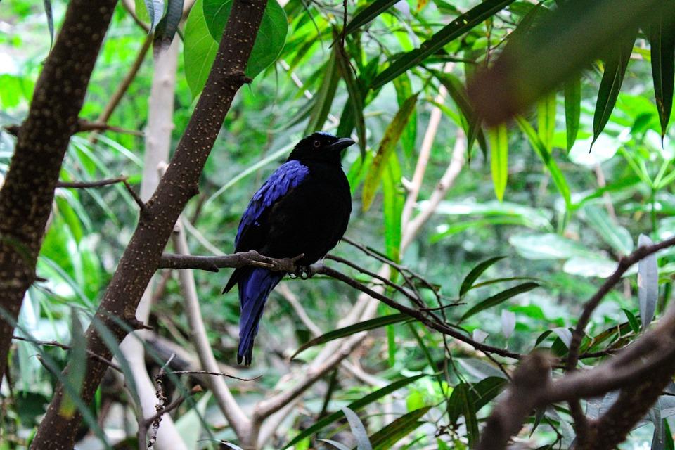 Bird, Nature, Forest, Birds, Animal, Bill, Feather
