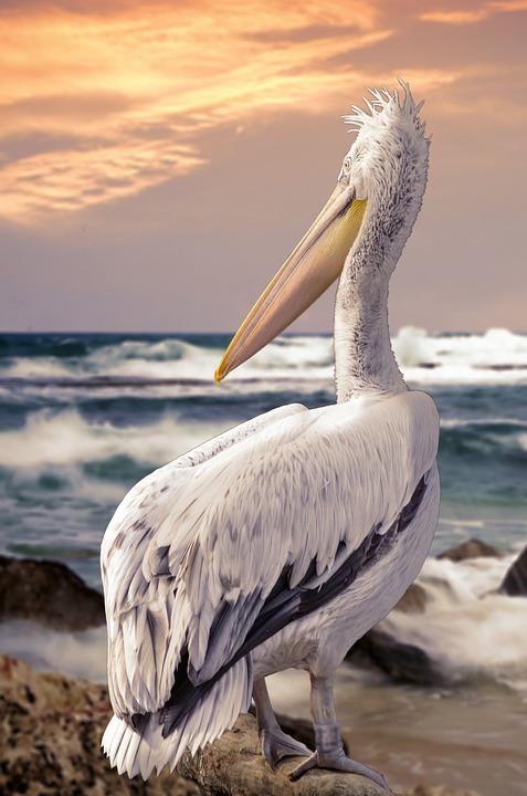 Bird, Feather, Nature, Animal World, Waters