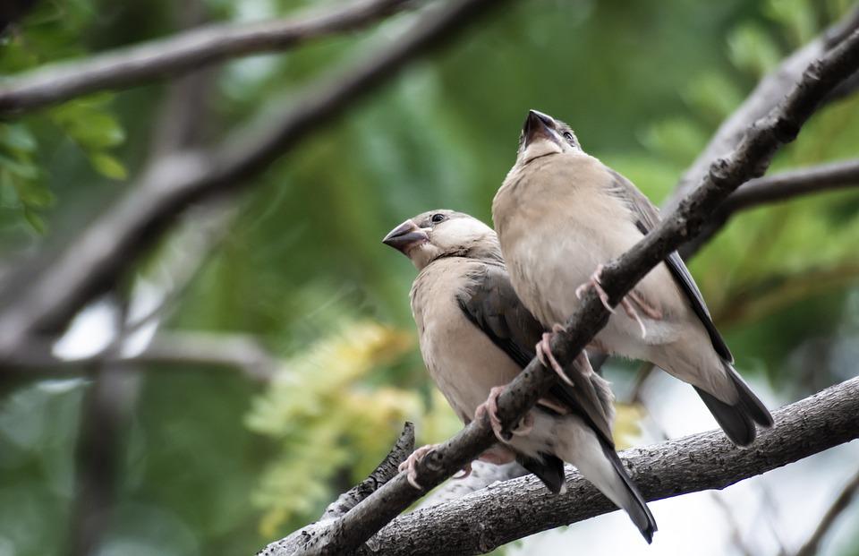 Bird, Nature, Wildlife, Animal, Plumage, Feather