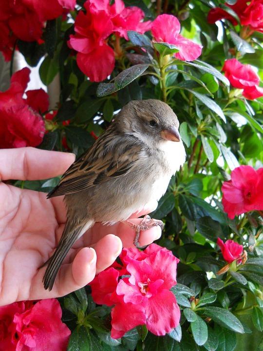Sparrow, Bird, Brown, Feather, Flowers, Flower