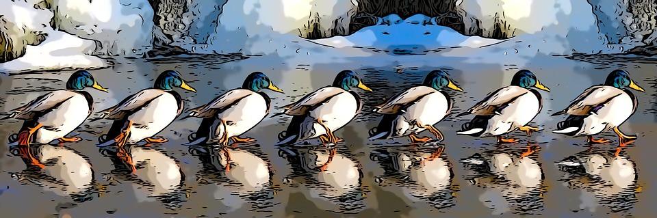 Birds, Comic, Animal, Cartoon, Cute, Nature, Feather