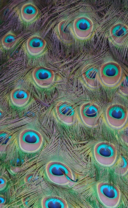 Feather, Peacock, Colorful, Pattern, Plumage, Gorgeous