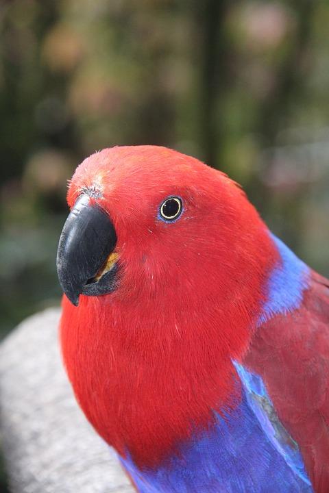 Bird, Parrot, Nature, Wildlife, Feather