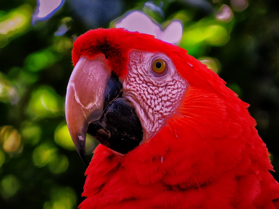 Parrot, Red, Nature, Animal, Bird, Feather, Bright