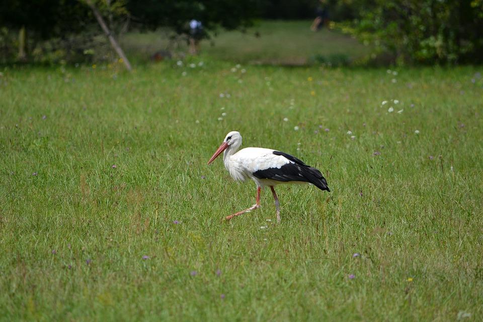 Stork, Bird, Green, Beak, Feather