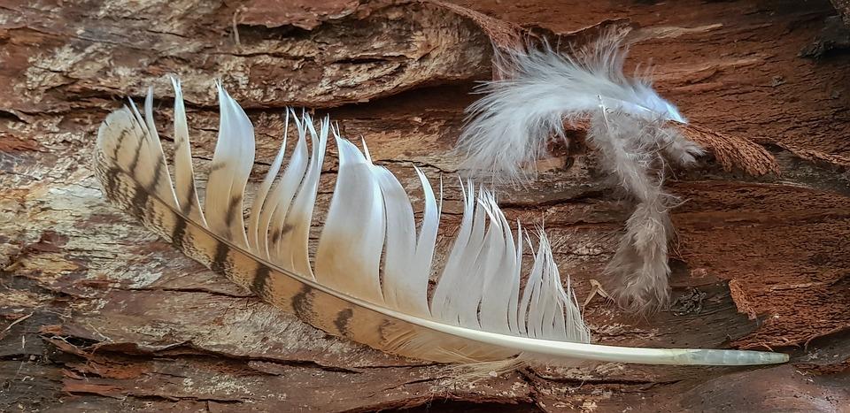 Still Life, Feather, Hunting, Tree Bark, Hunting Icon