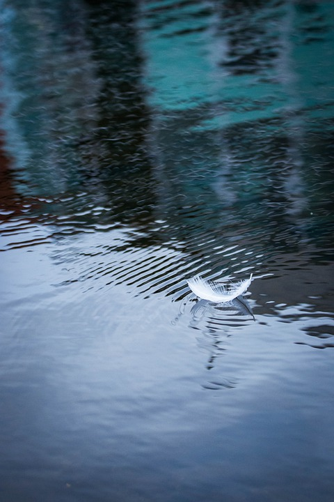 Feather, Water, Reflection, Plumage, Nature, Waters