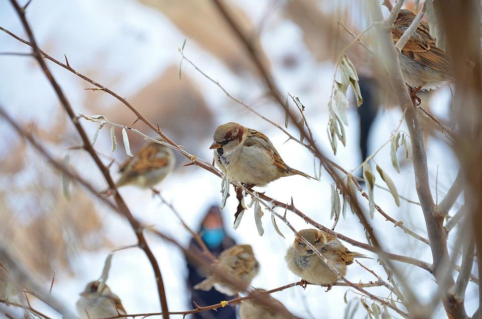 Bird, Fly, Wings, Feather, Wildlife, Beak, Wild, Animal