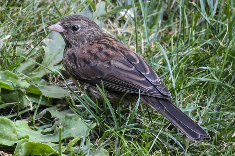 Sparrow, Bird, Feathered, Sitting, Nature, Wild